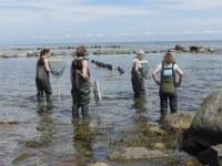 27. bis 29. Mai 2016: Bundesweite Fortbildung für Lehrkräfte zum Thema Ökosystem Ostsee